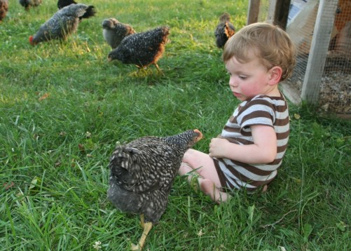 teddy meeting the chick