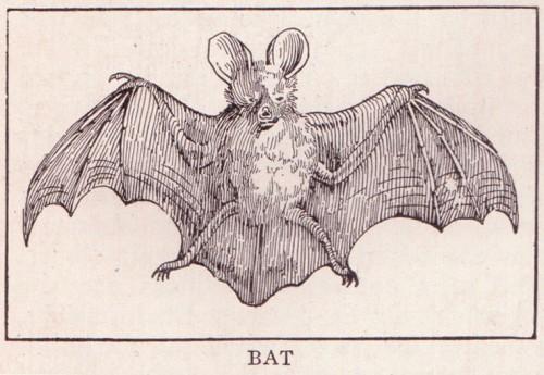 Bat_page_255