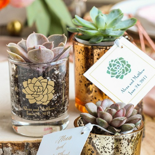Wedding Favors that won't blow up your budget - Succulents
