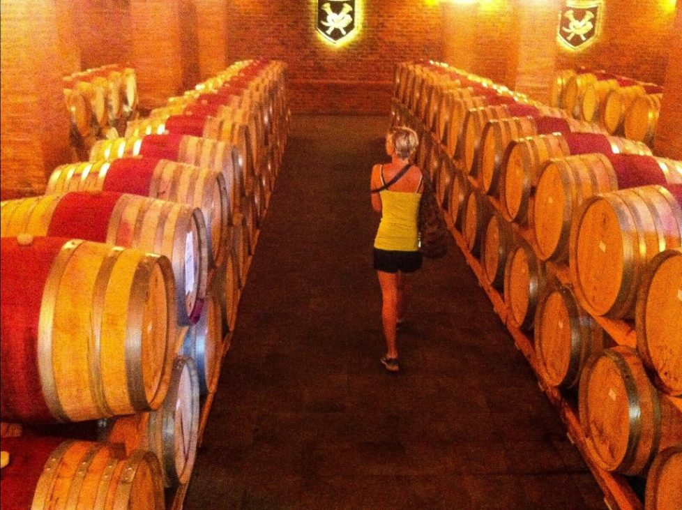La Motte cellar - How to win at wine tasting in South Africa