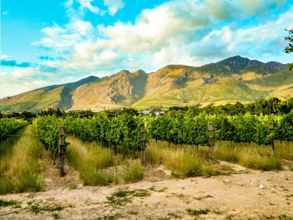 Franschhoek - How to win at wine tasting in south africa