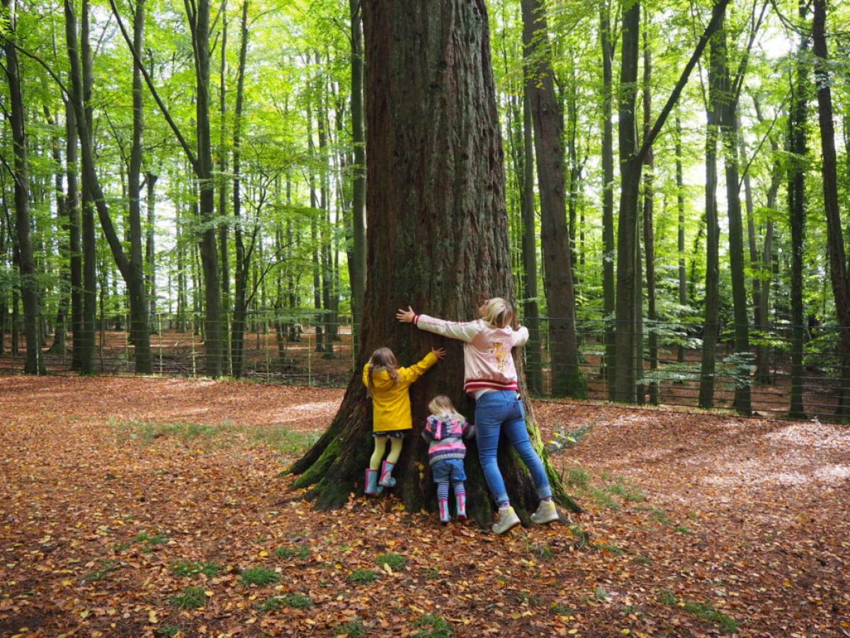 Ashton court estate tree hugging