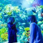 Bristol Aquarium - family-friendly bucket list Bristol