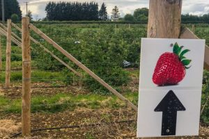 strawberry picking near Bristol