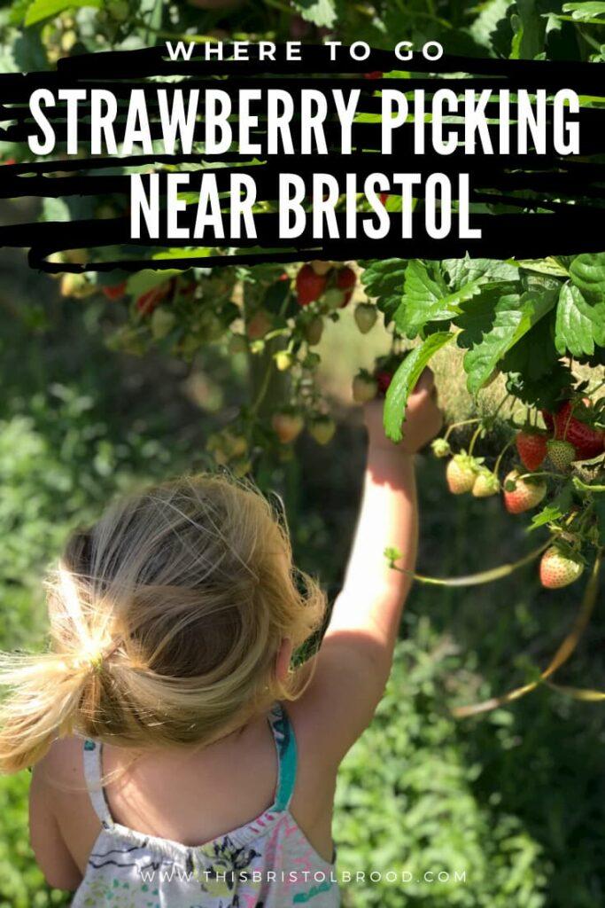 Where to go strawberry picking near Bristol