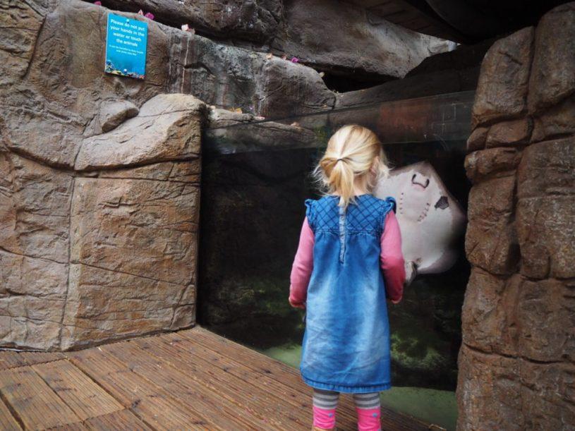 Rays at Bristol Aquarium