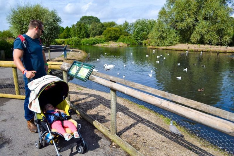 Buggy walk, WWT Slimbridge, South Gloucestershire