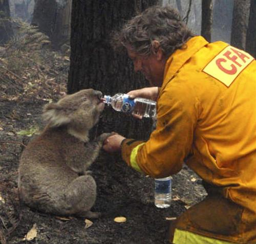 Look at the way the firefighter is holding the koala's hand!