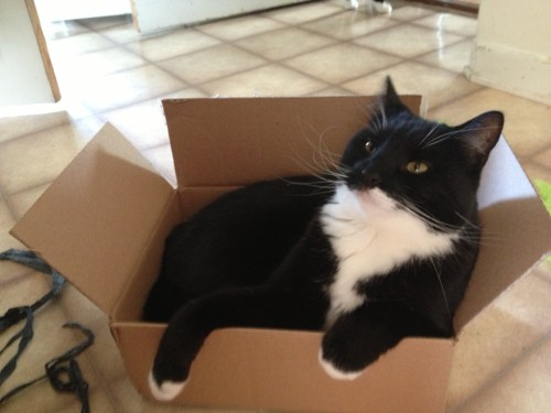 Fluffy has never met a box he didn't love