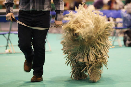top-dogs-at-crufts-dog-show-2011---pictures2