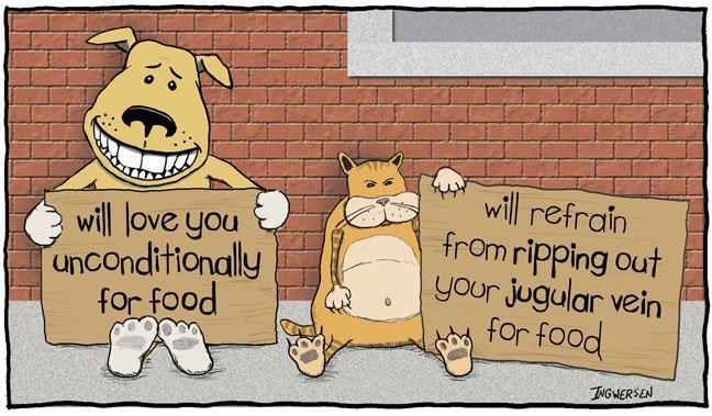 23-the-difference-between-cats-and-dogs