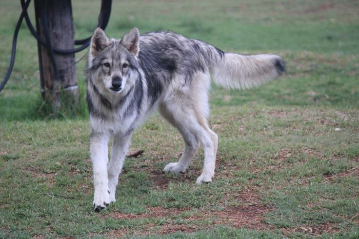 Apache, taken a few days before he was killed. He was not even a year old.
