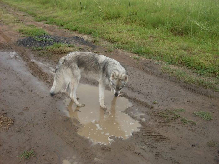 Apache loved water - photo by Bev