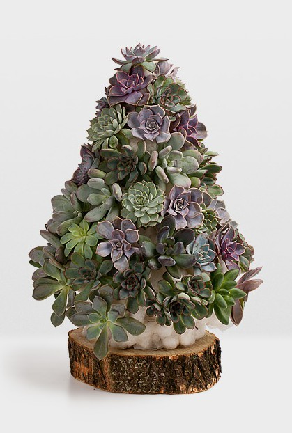 Succulent Christmas Tree!