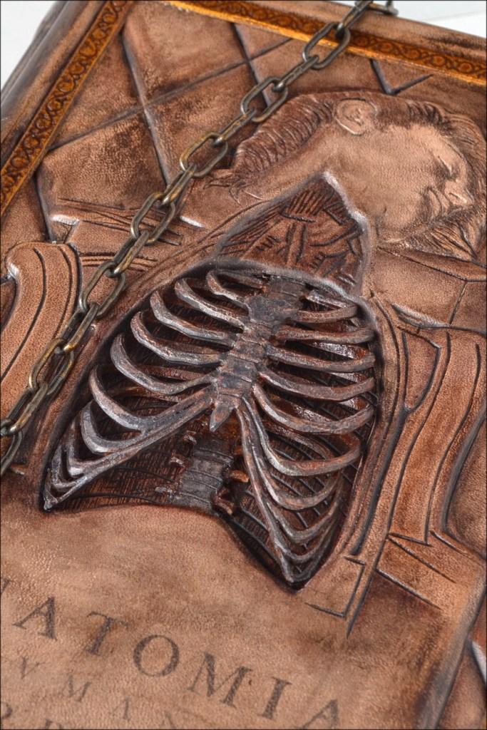 anatomia11