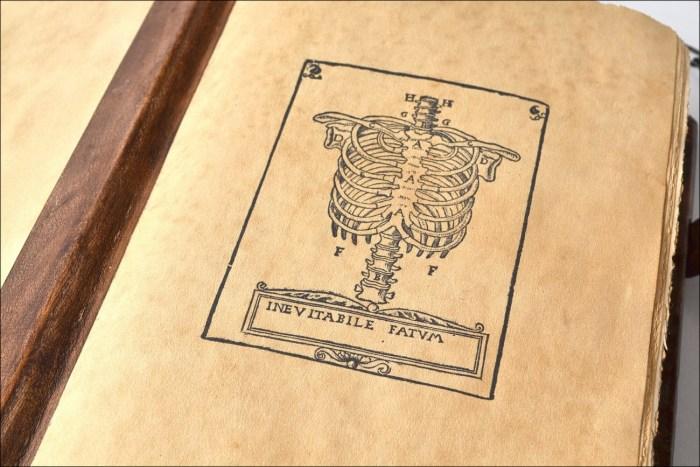anatomia13