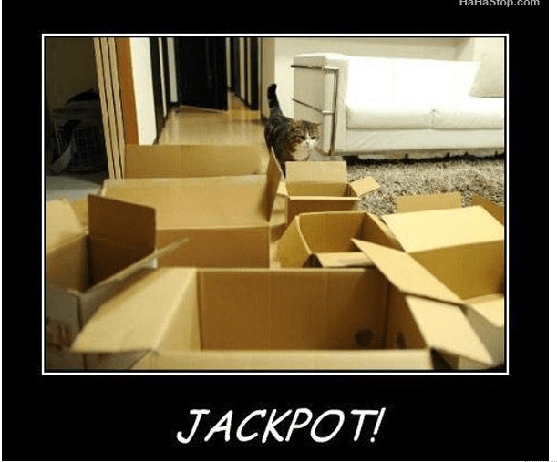 cat_and_boxes