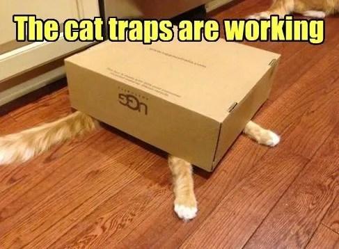 cattrapsarewurking