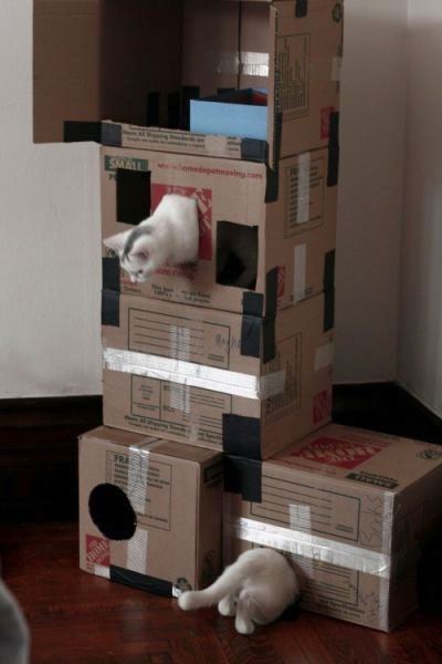 funny-cat-playing-boxes-Portal