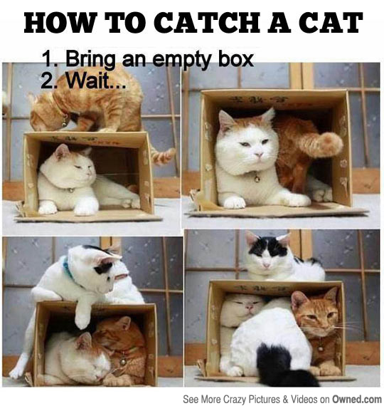 how_to_catch_a_cat_540