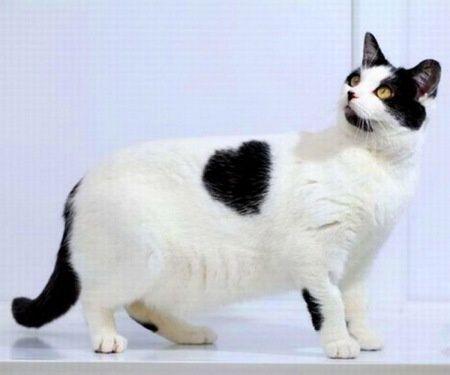 Black-heart-heart-cats