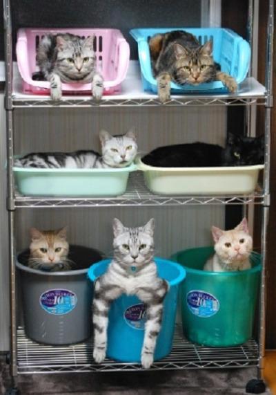 cat-storage-2