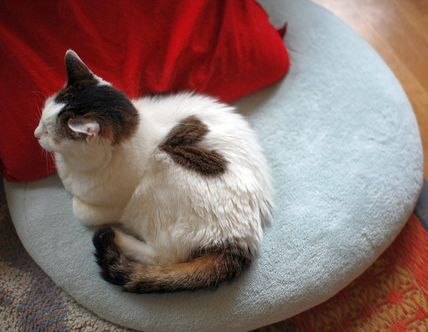 cats_hearts_on_fur_01