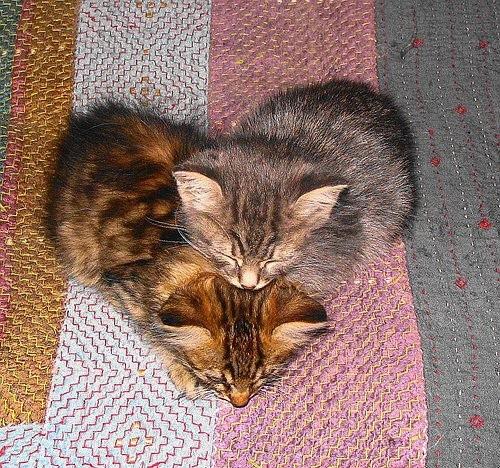 kitten-heart-heart-cats