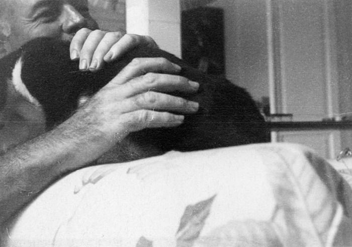 Hemingway and his cats