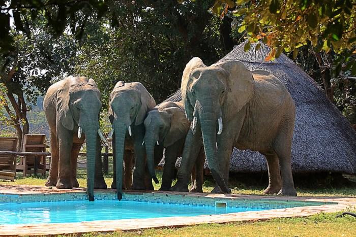 Eles-drinking-at-pool