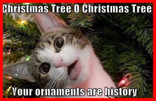 53963-Crazy-Christmas-Cat