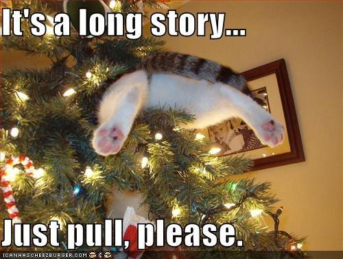 Long-story-cat-in-a-christmas-tree