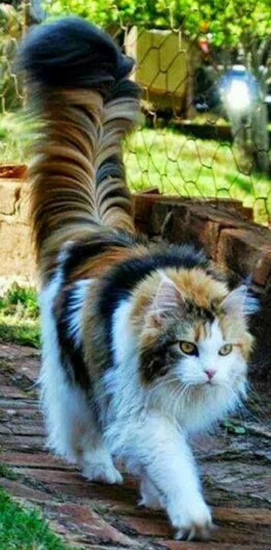 gatto a colori.2