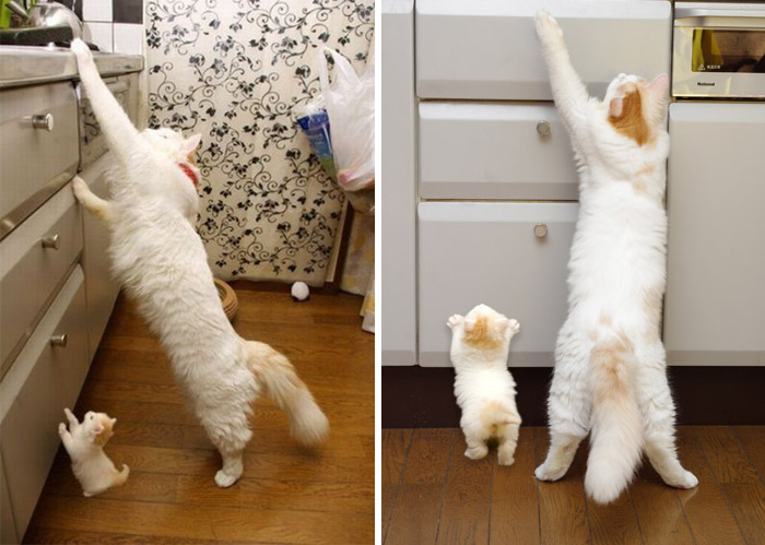 10-mom-cat-and-mini-me