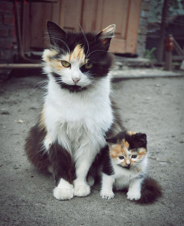 animals-with-miniature-versions-of-themselves-1