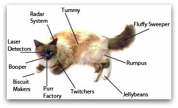 happy-cat-parts-1