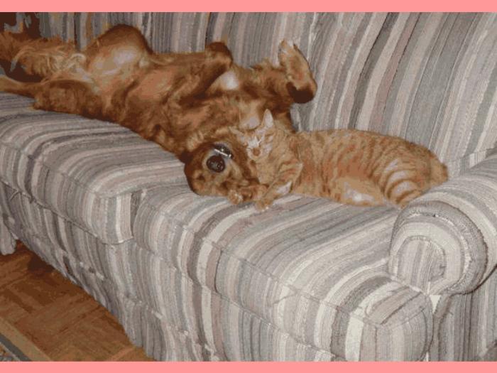 animals-sleeping-cat-and-dog