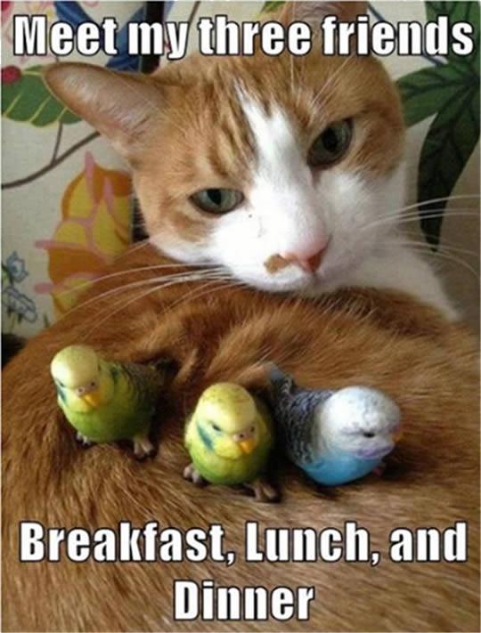 cute-kitten-with-birds