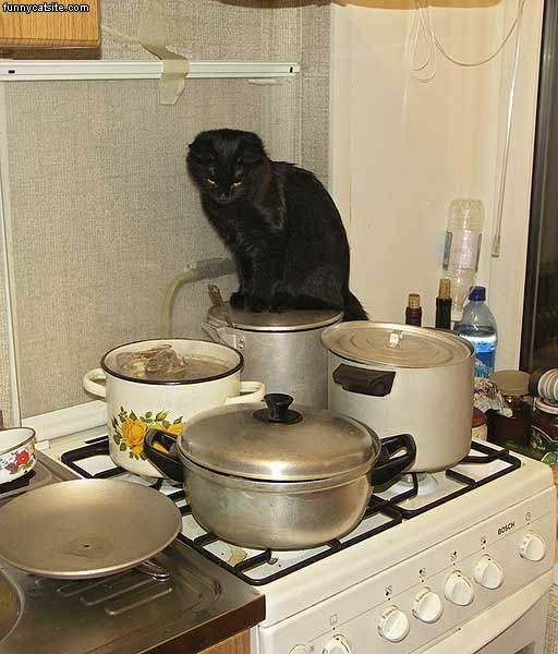 cooking-with-kitty-2