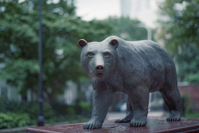 Fitler Square Bear