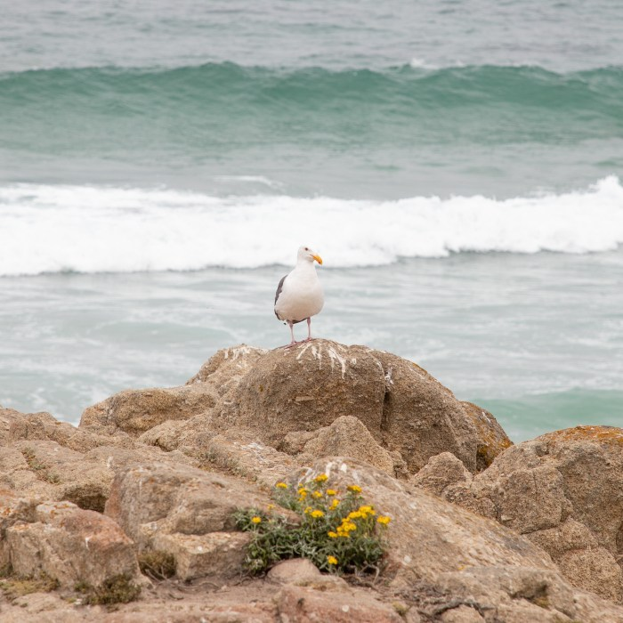 Seagull and Flowers