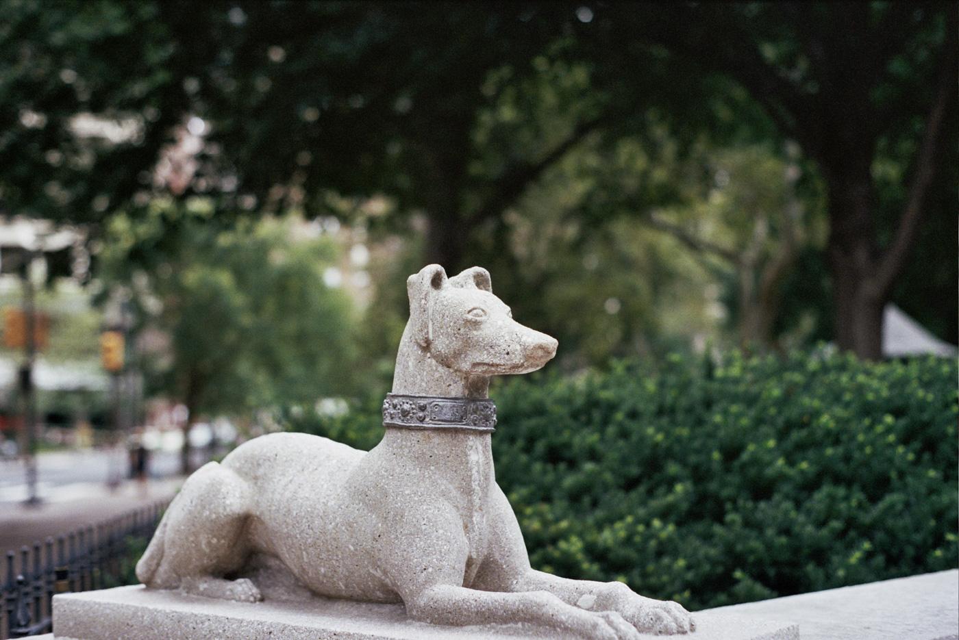 Rittenhouse Dog