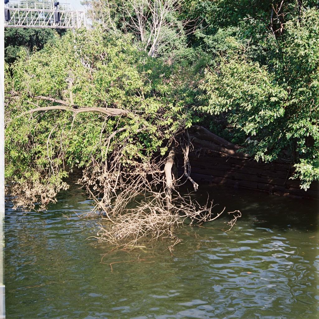 Schuylkill Tree