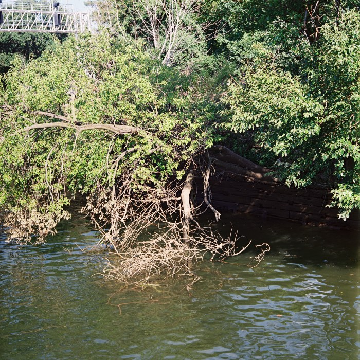 Schuylkill Tree - Cropped