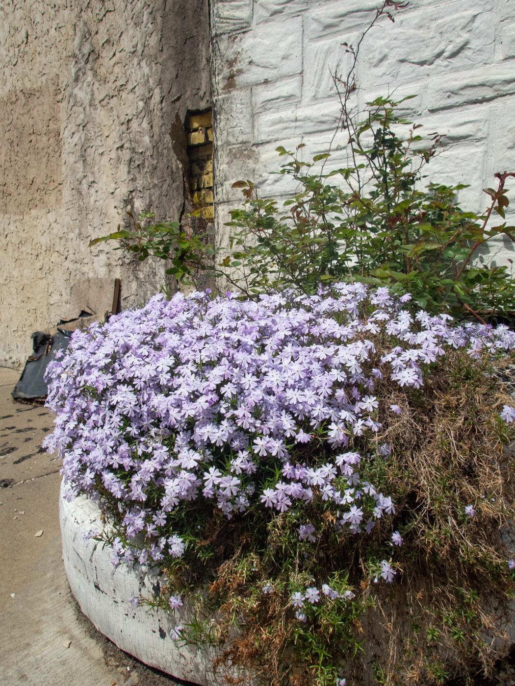 Tire Full of Flowers