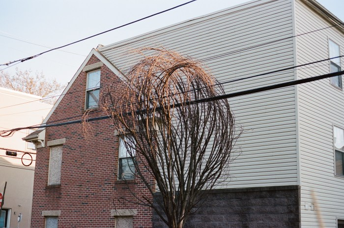 Tree and Wires