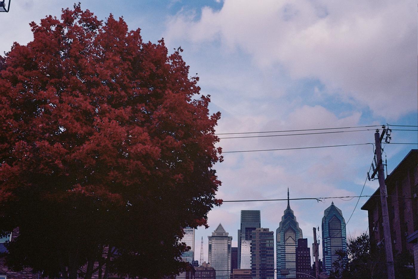 Autumn Tree and Philly Skyline