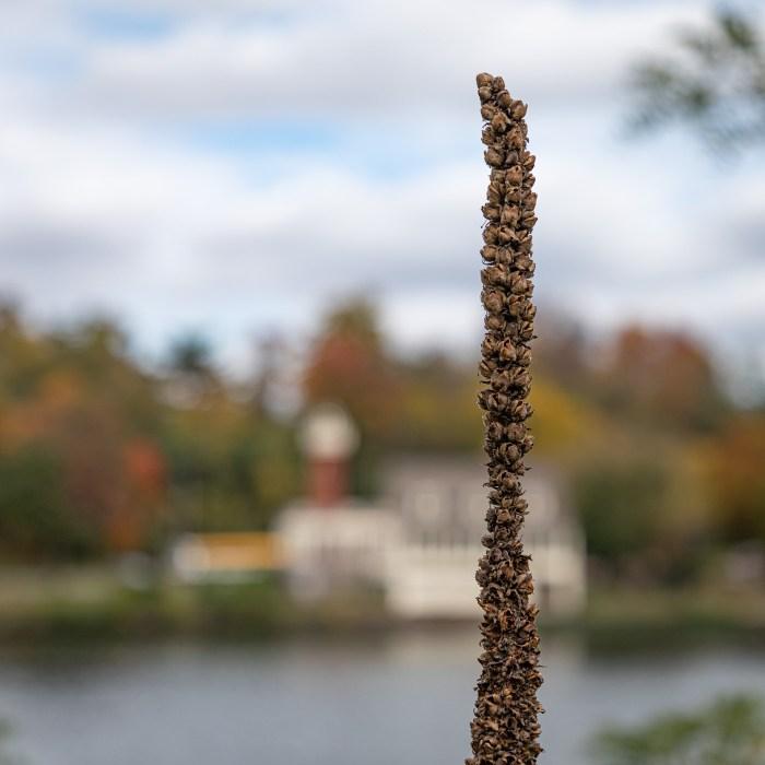 Autumn along the Schuylkill