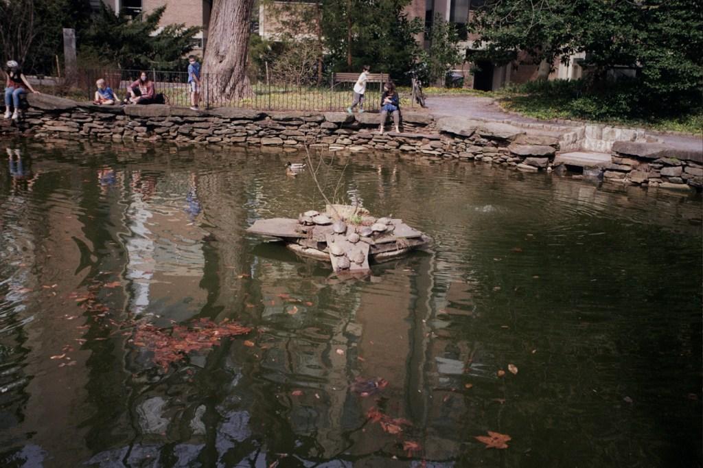 Turtles at James G. Kaskey Memorial Park