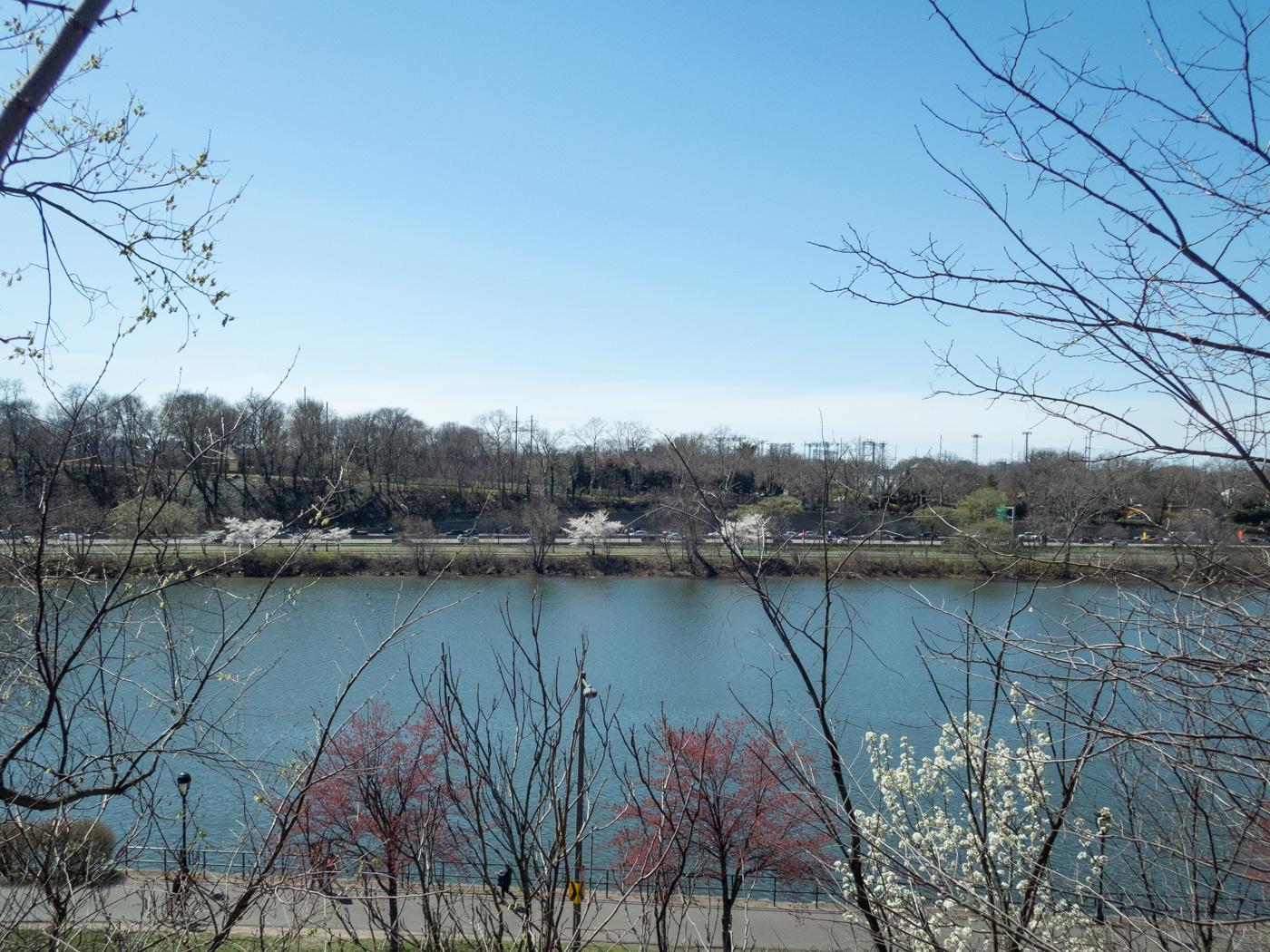 Spring Trees along the Schuylkill River